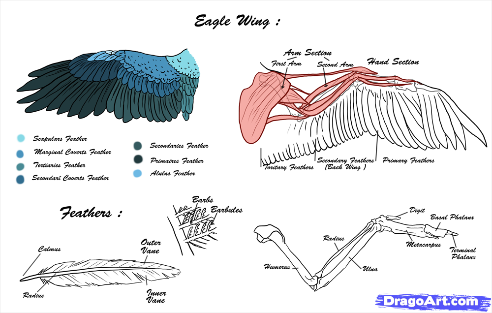 Anatomy and Capabilities - EAGLES